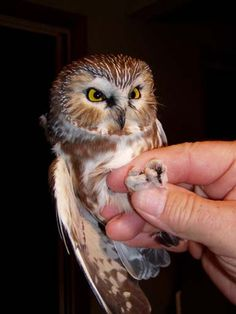 smallest, cutest owl!!