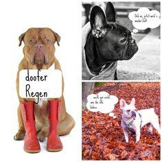 Holt euch auf Fiffibene Tipps, worauf ihr bei Hunde-Spaziergängen im Dunkeln achten müsst und wie ihr euren Hund im Herbst und Winter gesund und fit haltet.