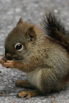 Little baby squirl eating a nut