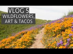 Wildflowers, Factory Art Show & Tacos: Vlog 5 In this video, I go to Chino Hills State Park to see the wildflowers, then head into Los Angeles for hot d. Chino Hills State Park, Los Angeles California, California Travel, Wildflowers, State Parks, Tacos, Lens, Country Roads, Adventure