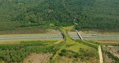 """La construcción de puentes """"verdes"""" para la fauna"""