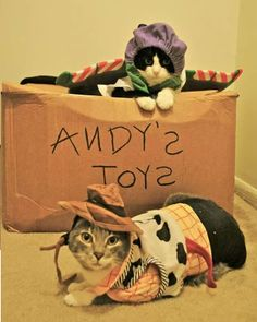 Toy story cat costumes