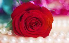 Resultado de imagem para gif de flores