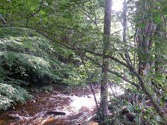 Wilson Creek, Mouth of Wilson,VA Vacation rental.... www.Facebook.com/MountainAirCottage