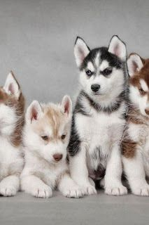 Dogs #animals #puppies