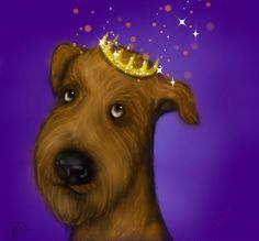 King of the Terriers