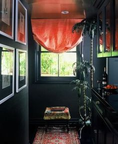 coral in a black room