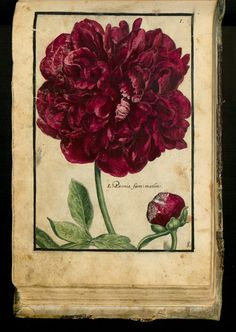 Design is fine. History is mine. — Crispijn de Passe, Hortus Floridus, 1614. Arnhem....