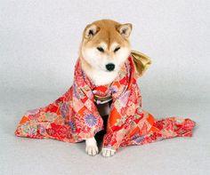 ちょwwwwwwwww犬発見wwwwwwwwwwwww - 犬速VIP@わんわんおwww