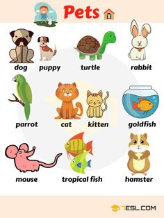 pets vocabulary, learn pet names List of Pets! Learn pet names with different types of pets in English with interesting ESL animal picture and example sentences. Pets are domestic animals Learning English For Kids, English Worksheets For Kids, English Lessons For Kids, Kids English, English Activities, English Language Learning, Teaching English, Animals Name List, Animals Name In English