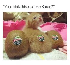 Cute Kittens And Puppies Cute Cats Jokes Funny Animal Jokes, Funny Animal Pictures, Cute Funny Animals, Funny Cats, Funny Photos, Funniest Animals, Funny Memes, Hilarious, Meme Pictures