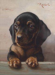 Carl Reichert Genç Av Köpeği ( Dakser)