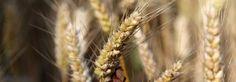 Seasoned Barley | Spring Fall Cleanse Breakfast