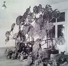 Henri Matisse 's studio