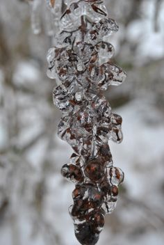Encased Series 2014 Ice Storm Seed Pods from My Garden Photography by Kat