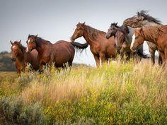Les fonds d'écran - Des chevaux en liberté