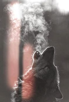 Cool Wolf Exhaling Picture