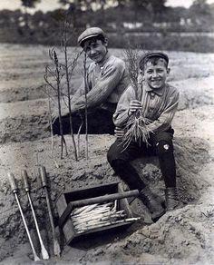 Niños en la Cosecha de Espárragos.                                                                 Los Países Bajos.                                            1911 .