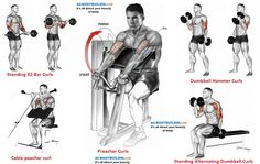 Different exercises to pump the biceps 6 Day Workout Routine, Gym Workout Chart, Workout List, Workout Days, Biceps Workout, Fun Workouts, Workout Exercises, Huge Biceps, Weight Training Workouts