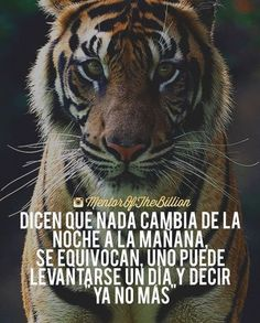 Spanish Memes, Spanish Quotes, Lion Quotes, Me Quotes, Tiger Quotes, Mentor Of The Billion, Spanish Inspirational Quotes, Millionaire Quotes, I Hate People