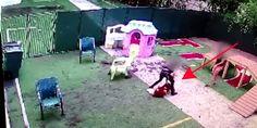 El perro de este vídeo tuvo que ser sacrificado tras el maltrato por parte de un empleado #viral