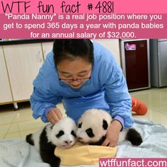 The best job in the world? -   WTF fun facts| To Apply: [ fun.sohu.com ] but you need to be at least 22yo and be able to read Chinese
