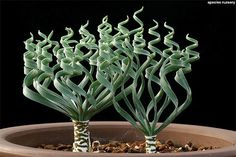 ネペンテス 東京に珍奇植物専門店「スピーシーズ ナーセリー」の限定ストア - 個性的な植物が集結 | ニュース - ファッションプレス