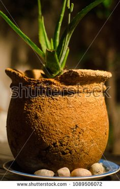 Weathered antique earthenware ceramic with plant