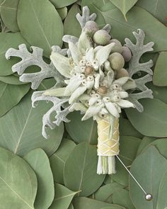 Edelweiss Boutonniere: Edelweiss flowers and frog berries over dusty-miller leaves finished with jacquard ribbon.
