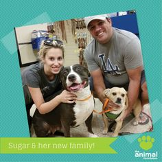 After almost two months of waiting, guess who found her forever home last night? Sugar (A781879)! Enjoy your pawsome new family!
