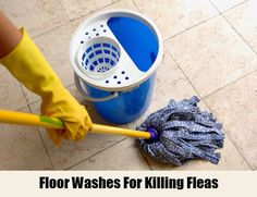 7 Effective Home Remedies For Killing Fleas | http://www.searchhomeremedy.com/effective-home-remedies-for-killing-fleas/