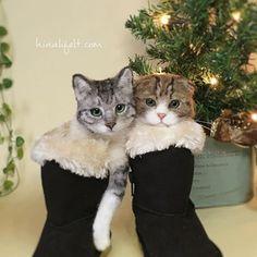 * Felted cats in the boots * Happy Holidays! * ブーツに入った羊毛猫。クリスマス前なので、それらしく撮ってみました。 * みなさま楽しい時間を過ごされてください * 私は特に予定がありません。チキンでも買って食べようかしら * * #フェルト #羊毛 #ふわもこ部 #ねこら部 #ひなり #ねこ #Kedi #cat #Katze #catstagram #catsofinstagram #woolfelt #hinali #wool #needlefelting #СУХОЕВАЛЯНИЕ  #cats_of_instagram #handmade #felting #needlefelt #羊毛氈 #羊毛毡 #happyholidays #kitten #kitty #kittycat #merrychristmas