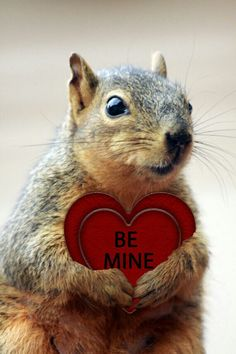 ☆Valentine squirrel by proteamundi Animals And Pets, Baby Animals, Funny Animals, Cute Animals, Wild Animals, Cute Squirrel, Baby Squirrel, Squirrels, Little Critter