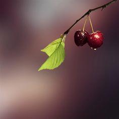 Pure Simple Dew Waterdrop Twig Bokeh Blur #Retina #iPad #Air #wallpaper
