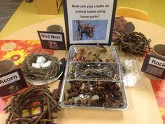 Forest inquiry, The Sunflower School, Orangeville Ontario, making nests Classroom Setting, Classroom Themes, Classroom Activities, Infant Activities, Science Activities, Forest Classroom, Create An Animal, Emergent Curriculum, Addition Games