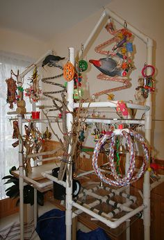 bird play gym designs - Google Search