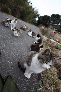 cat island in japan!