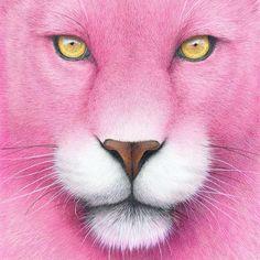 """Pink Panther"" - 21x29cm - colored pencil. This one's from last year. #art #worldofpencils #drawing #nawden #Bestdm #artists_magazine #instaart #artFido #skrien #artcollective #Art_spotlight #WorldOfArtists #art_empire #artsanity #artist_sharing #arts_help #artist_features #aartistic_dreamers #sketch_daily #hyperrealism #photorealism #artofdrawingg #Padgram"