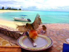 Bird stealing my food, same place same experience! Beauty on earth