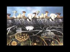 Paul Stamets and John B. Wells - Mushrooms  Environment  I love mushrooms even more now and I think I have a crush on Paul too ;)