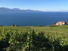 Mahtava kokemus päästä työskentelemään viinitilalle, upealle Lavauxin alueelle, joka on UNESCO-kohde.