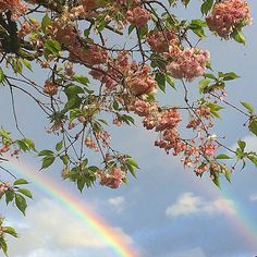 // a rainbow shown brightly over the horizon. pink pastel flowers were adorned w. - Laura Hoffarth // a rainbow shown brightly over the horizon. pink pastel f Spring Aesthetic, Flower Aesthetic, Aesthetic Photo, Aesthetic Pictures, Aesthetic Colors, Violet Aesthetic, Sky Aesthetic, Aesthetic Vintage, Aesthetic Fashion