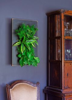 h ngende blument pfe coole pflanzenideen f r den innenraum zimmerpflanzen pinterest. Black Bedroom Furniture Sets. Home Design Ideas