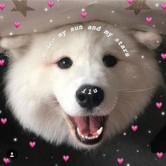 Things that make you go AWW! Like puppies, bunnies, babies, and so on. A place for really cute pictures and videos! Cute Dogs, Cute Babies, Funny Dogs, Cute Love Memes, Crush Memes, Wholesome Memes, Reaction Pictures, Cute Baby Animals, Funny Animals