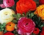 Flower seasons and colour guide|Australian Flowers|Botanical Names| Academy of Floral Art