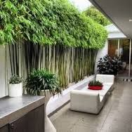 Image result for pleached bamboo