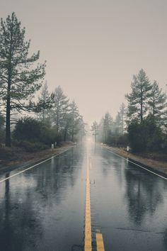 forest, haze, landscape