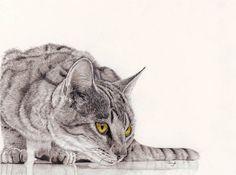 Gayle Mason - английская художница, работающая в основном цветными карандашами, пастелью и акрилом.Гейл-биолог по профессии. Она безумно любит животных и все ее работы посвящены им. Здесь только кисы от Gayle Mason .