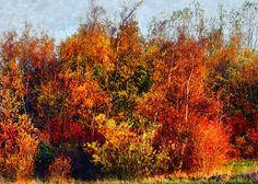 Hedeland: Symfoni i efterårets farver ved Fiskesøen