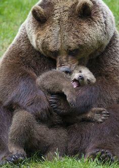 Mom and baby bear... Adorable